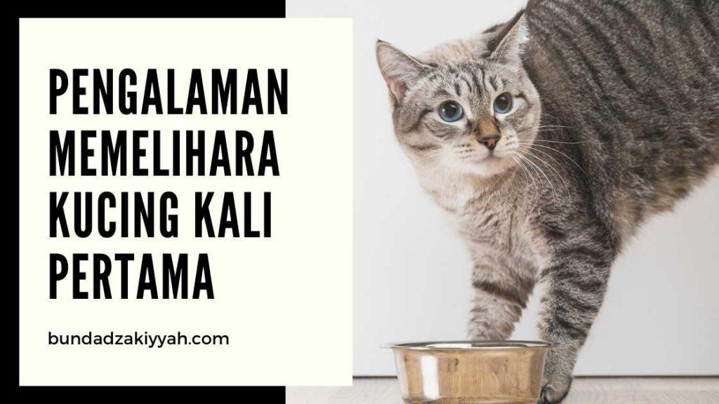 Pengalaman Memelihara Kucing Parenting And Healthy Blog
