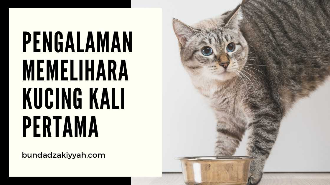 pengalaman memelihara kucing