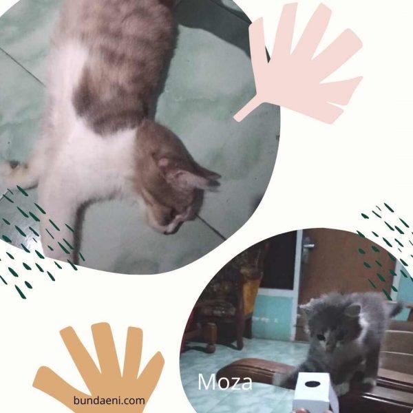 moza dan nonik kucing pertama kami